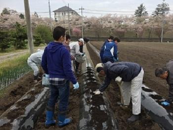 ③ヤーコン芋を入れ土をかけていきます007.jpg
